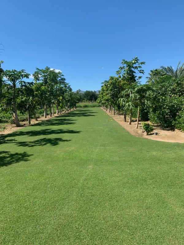Flora Farms Cabo Wedding